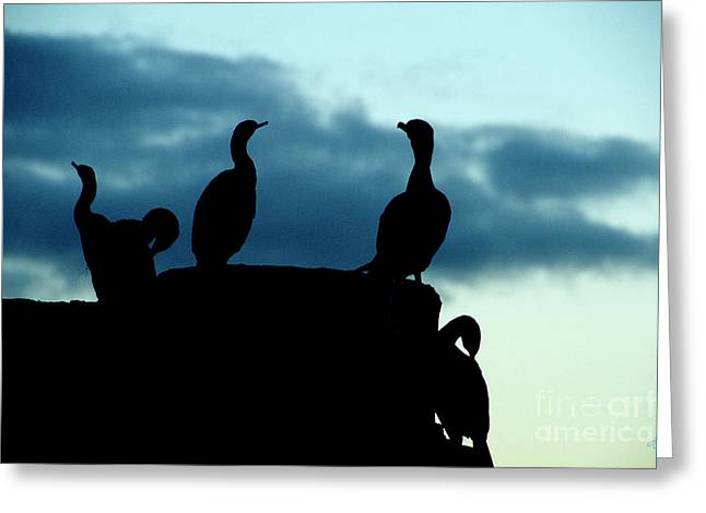 Cormorants In Silhouette Greeting Card
