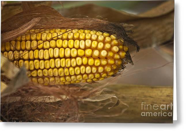 Corn Greeting Card