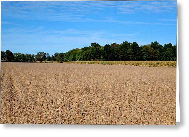 Corn Farm In Catskill 3 Greeting Card by Lanjee Chee