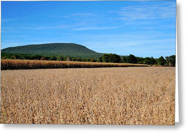 Corn Farm In Catskill 4 Greeting Card by Lanjee Chee