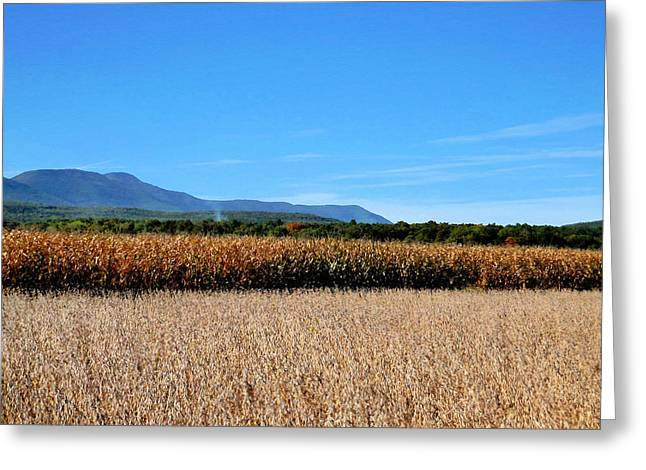 Corn Farm In Catskill 5 Greeting Card by Lanjee Chee