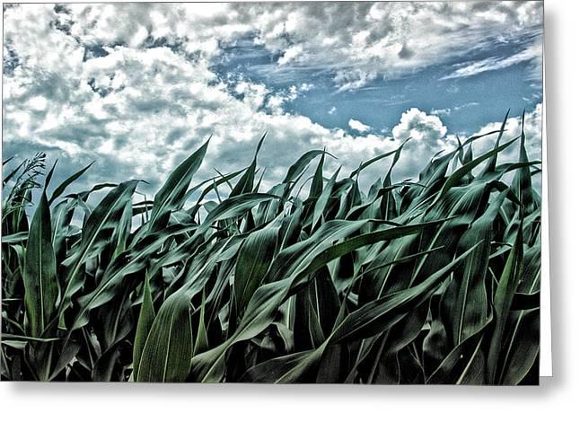 Corn Field 1 Greeting Card by Bonnie Bruno