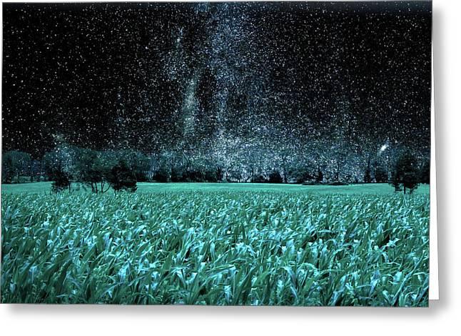 Corn Field At Night Greeting Card