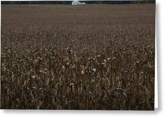 Corn Field Farm House Greeting Card by Michael L Kimble