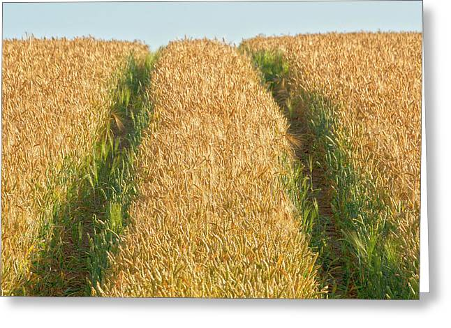 Field. Cloud Greeting Cards - Corn field Greeting Card by Heiko Koehrer-Wagner