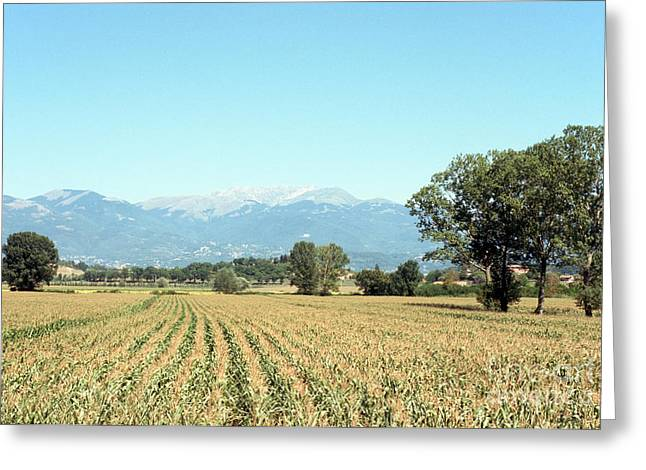Corn Field With Terminillo Mount Greeting Card