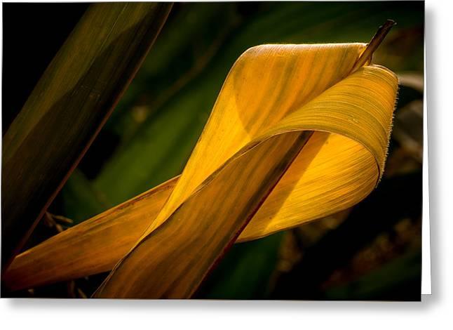 Corn Leaf Greeting Card