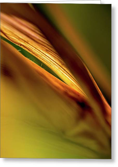 Corn Leaves Nr. 4 Greeting Card by Mah FineArt