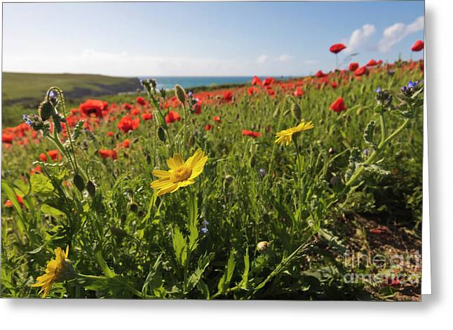 Corn Marigold And Poppies Greeting Card by Terri Waters