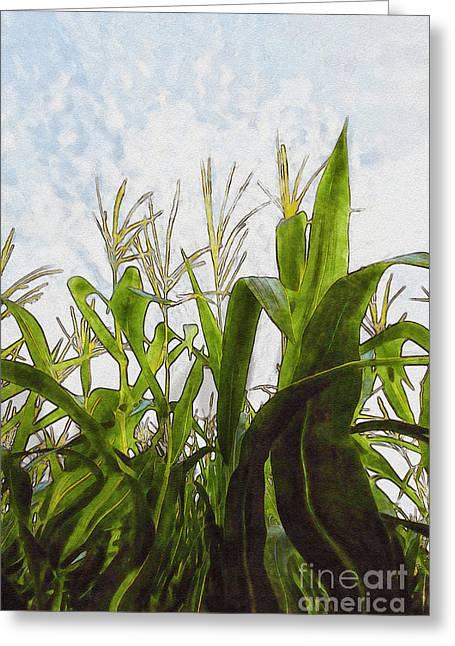 Landscape- Corn Maze Greeting Card