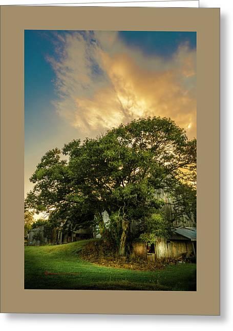 Corner Oak Greeting Card
