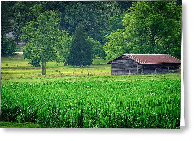 Cornfield Shed Greeting Card by Billy Burdette