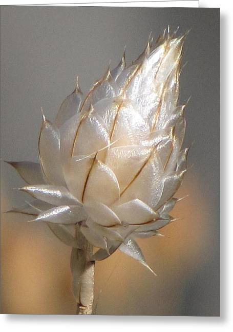 Cornflower Seed Pod Greeting Card by Michele Penner