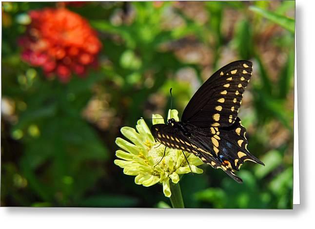 Corolla Garden Greeting Card by JAMART Photography