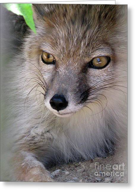 Greeting Card featuring the photograph Corsac Fox- Vulpes Corsac 03 by Ausra Huntington nee Paulauskaite