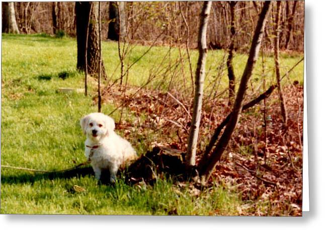 Cory Waiting For Master  Greeting Card by Ruth  Housley