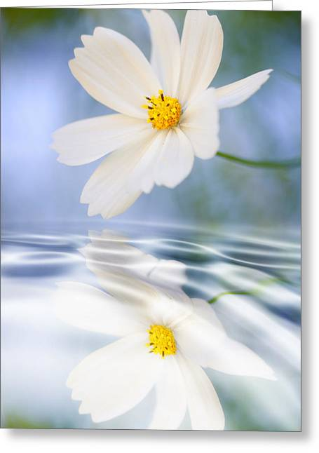 Cosmea Flower - Reflection In Water Greeting Card by Silke Magino