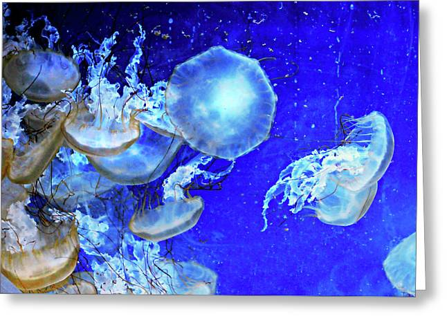 Cosmic Jellies Greeting Card by Diana Angstadt