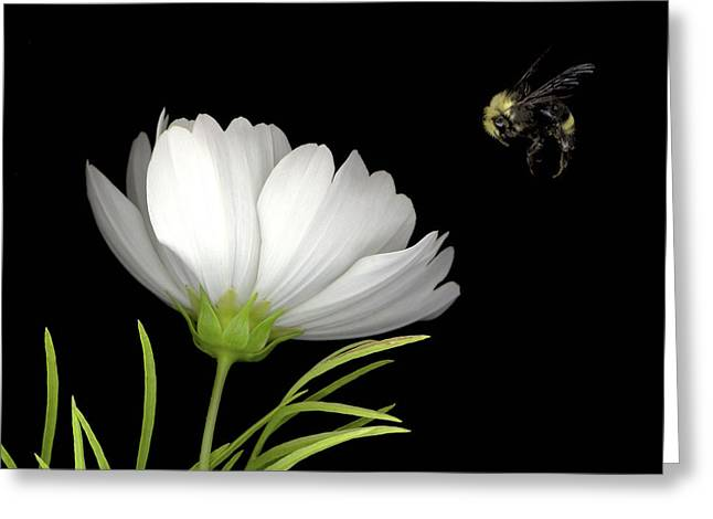 Cosmo And Bee Greeting Card by Sandi F Hutchins