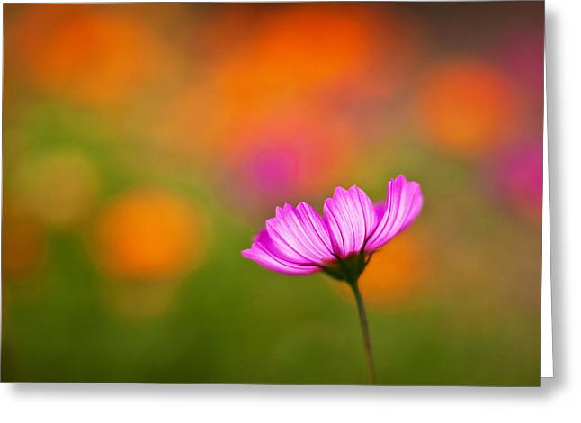 Cosmo Pastels Greeting Card by Mike Reid