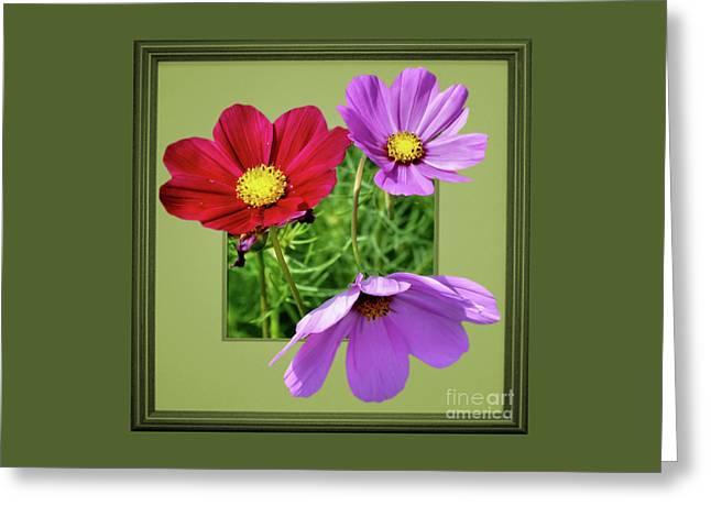 Cosmos Flower Peeking Out Greeting Card