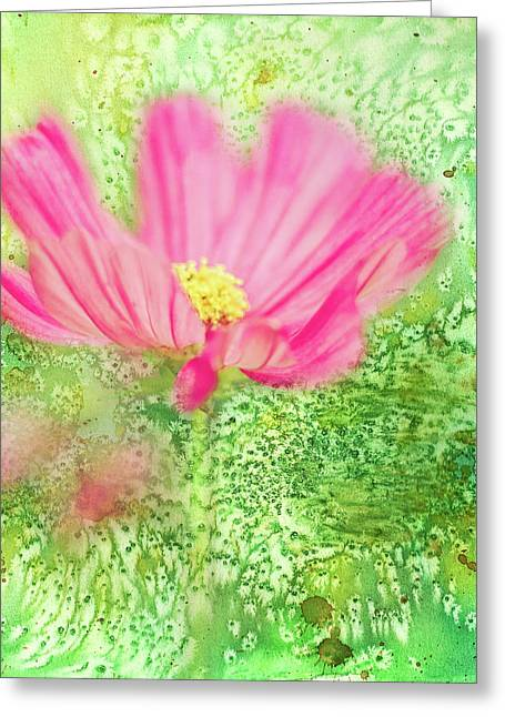 Cosmos On Green Greeting Card
