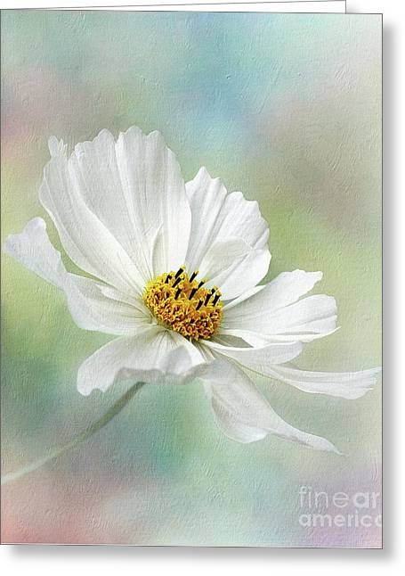 Cosmos Pastel By Kaye Menner Greeting Card