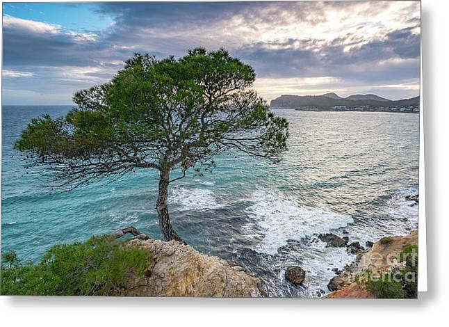 Costa De La Calma Tree Greeting Card
