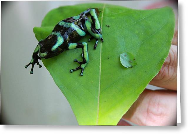 Costa Rican Poison Dart Frog Greeting Card