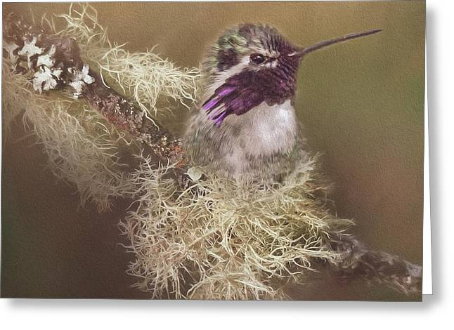 Costas Hummingbird Painted Greeting Card