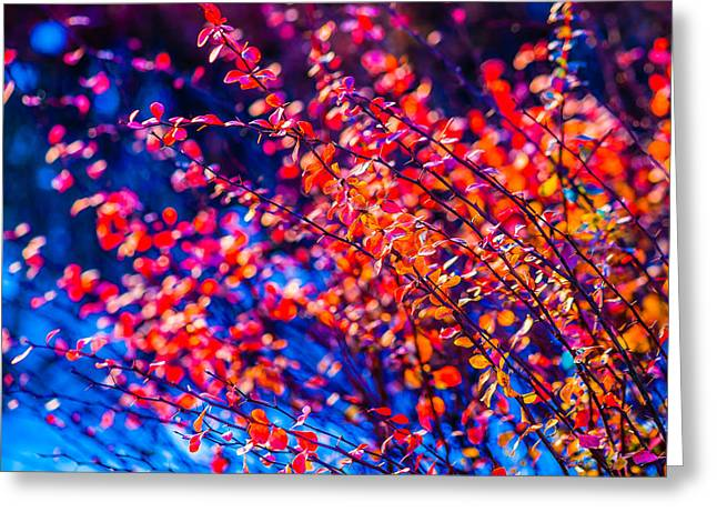Greeting Card featuring the photograph Cotoneaster In Winter by Alexander Senin