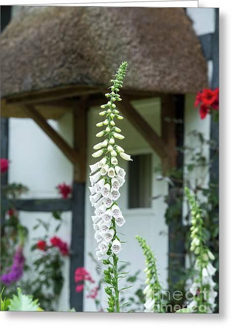 Cottage Garden Foxglove Greeting Card