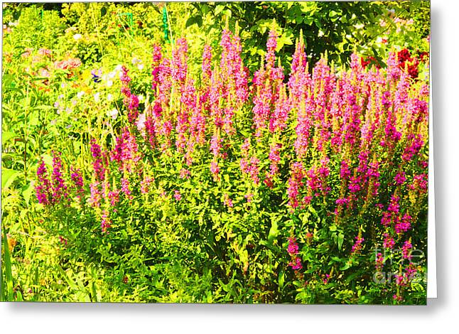 Cottage Garden Of Lupines Greeting Card by MaryJane Armstrong