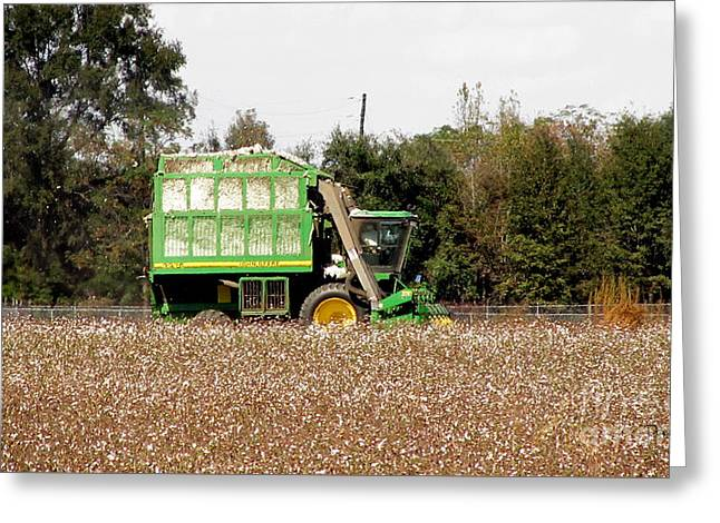 Cotton Picker Greeting Card by Donna Brown