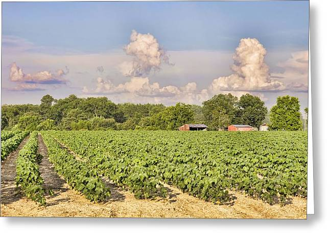 Greeting Card featuring the photograph Cotton Hasn't Flowered Yet by Jan Amiss Photography