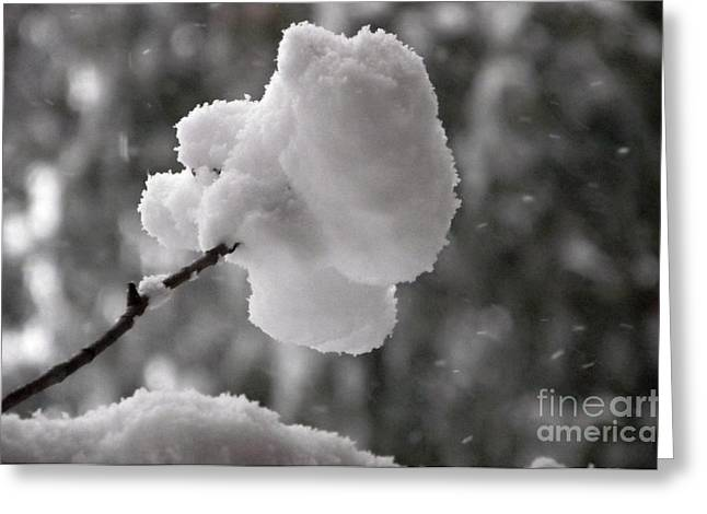 Cotton Snow Greeting Card