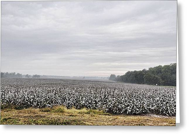 Greeting Card featuring the photograph Cotton Under The Mist by Jan Amiss Photography