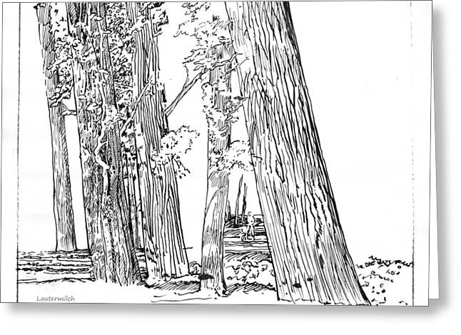 Cotton Woods Creve Coeur Path Greeting Card by John Lautermilch