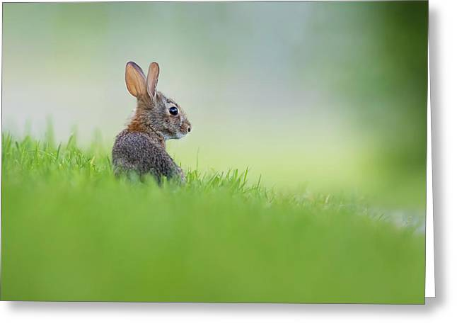 Cottontail Baby Greeting Card