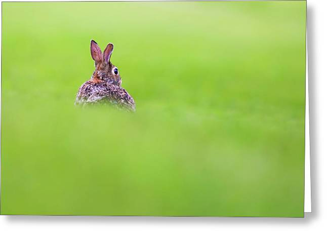 Cottontail In Green Greeting Card