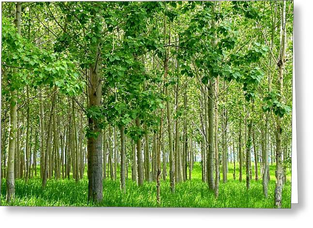 Okanagan Valley Greeting Cards - Cottonwood Grove Greeting Card by Will Borden