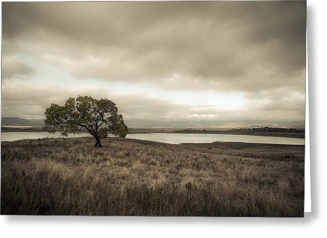 Cottonwood In October Greeting Card by Alexander Kunz