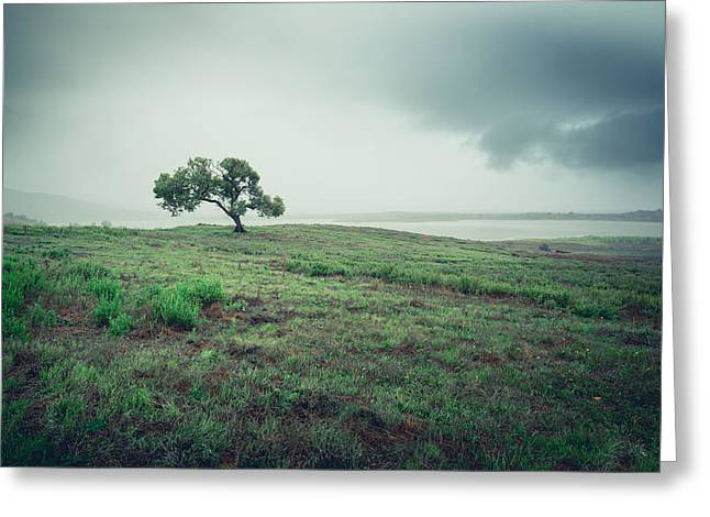 Greeting Card featuring the photograph Cottonwood In October Storm by Alexander Kunz