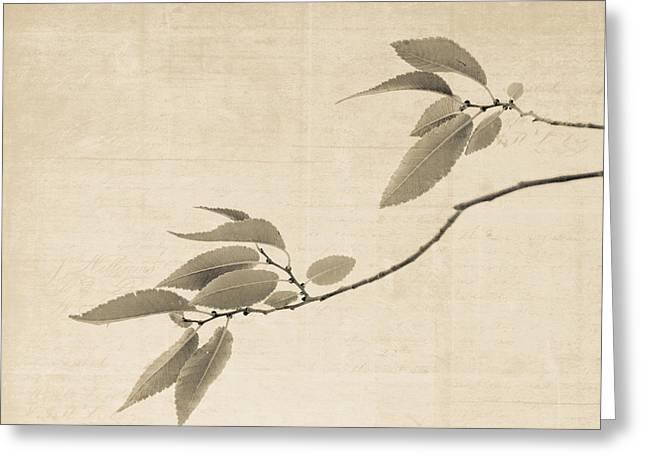 Cottonwood Leaves Greeting Card by Sheri Van Wert