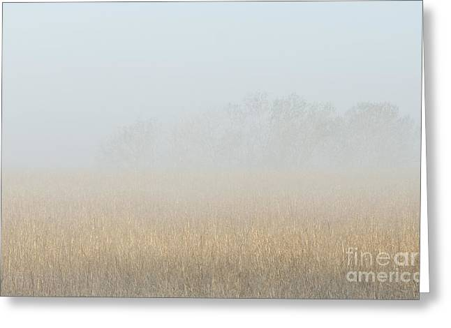 Cottonwood Trees In Fog Greeting Card by Fred Lassmann
