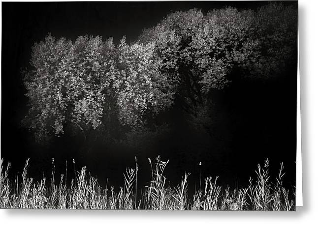 Cottonwoods And Grasses Greeting Card