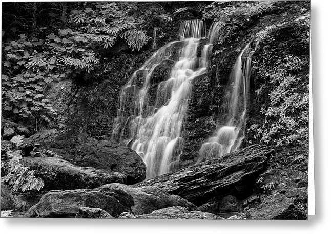 Cougar Falls - Black And White Greeting Card by Stephen Stookey