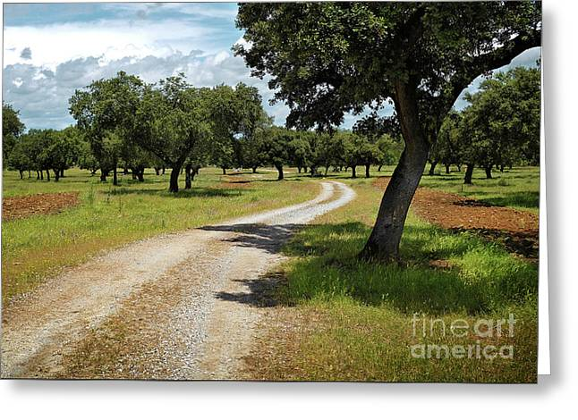 Countriside Trail Greeting Card by Carlos Caetano