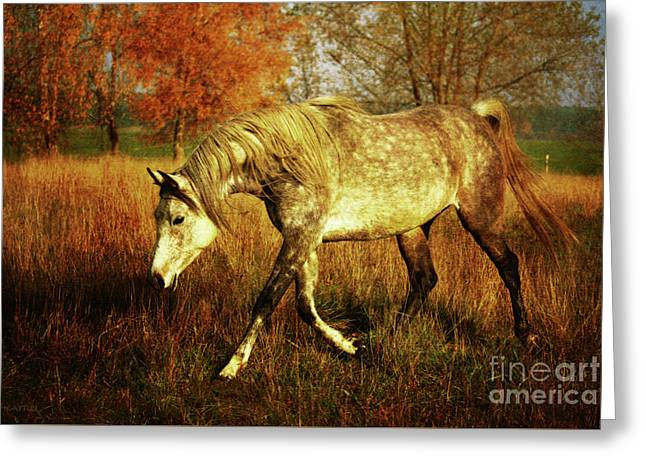 Country Autumn Greeting Card