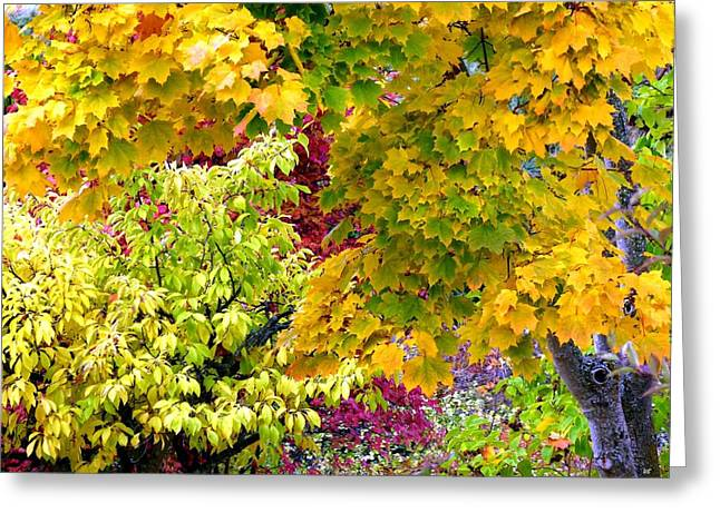 Okanagan Valley Greeting Cards - Country Color 15 Greeting Card by Will Borden